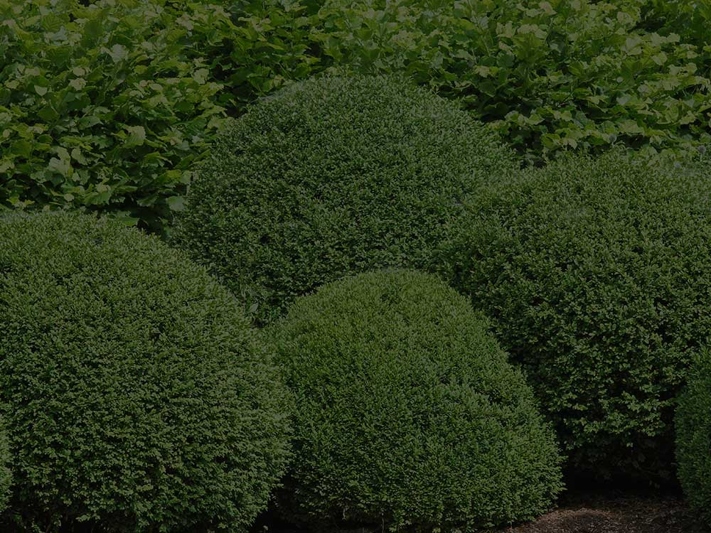 West Bloomfield Township Shrubs and Hedges